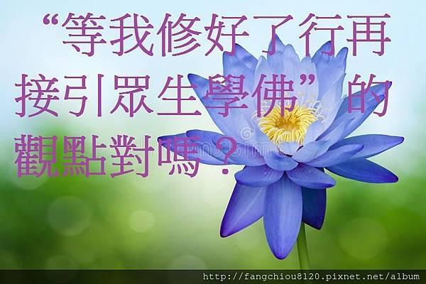 蓝色荷花-38817755[1].jpg