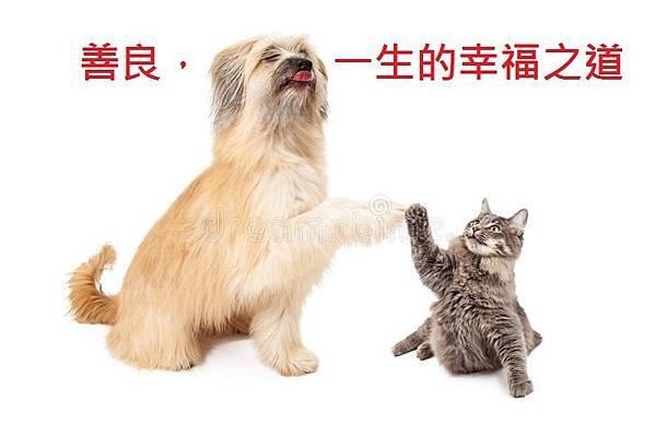 大狗和小的猫高五-51974099[1].jpg