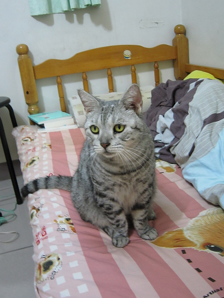 貓剛好坐在床上