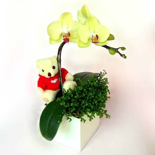 2011韋尼熊蘭花.jpg