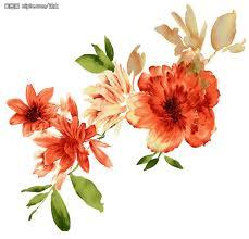 images花卉2.jpg