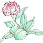 31bO花卉3.jpg