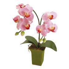 2011蘭花盆栽1.jpg