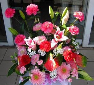 0fbc203盆花7-1.jpg
