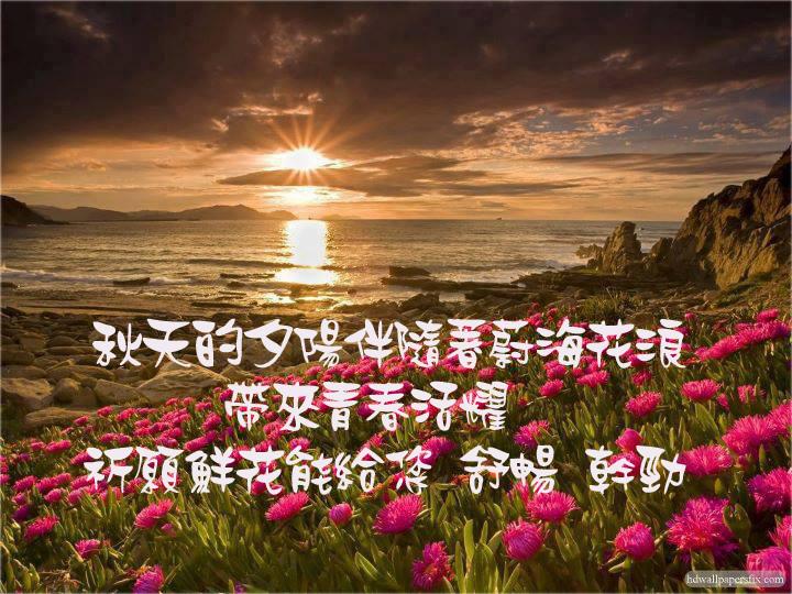 夕陽與花.jpg