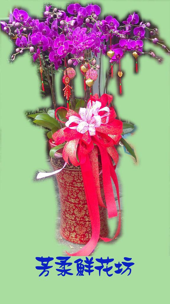 蘭花11.jpg