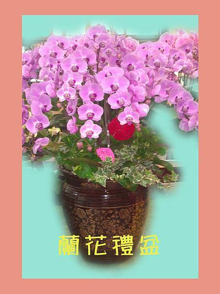 15年蘭花禮盆9.jpg