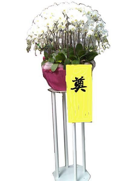 大圓形蘭花4.jpg