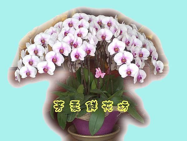 圓型蘭花1.jpg