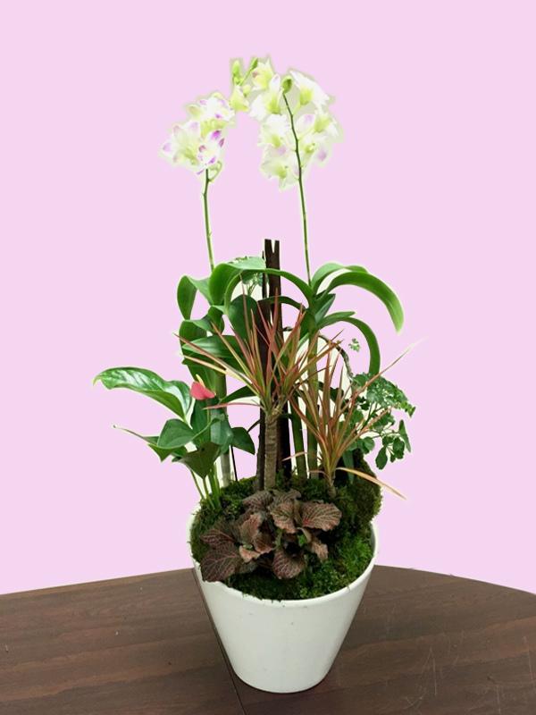 蘭花組合12.jpg