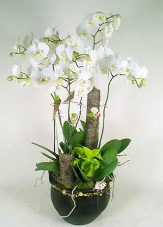 蘭花16.jpg