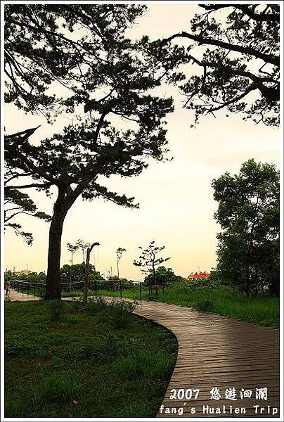 松樹參天的步道
