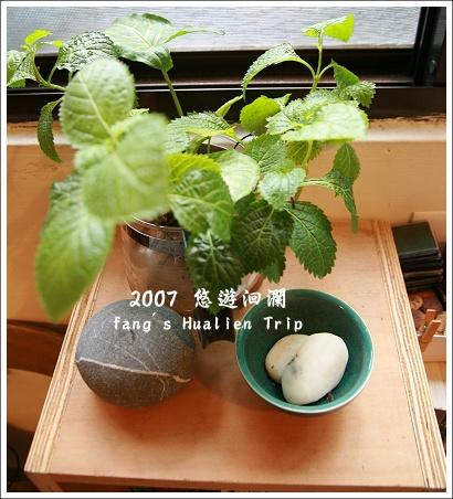 窗邊的小植物
