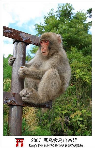 頻頻換姿勢的猴子