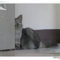 門後的貓1.jpg