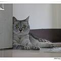 門後的貓2.jpg