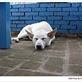 牆角熟睡的老狗