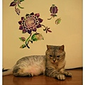 最佳貓模登場