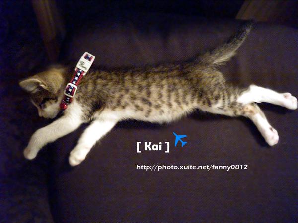 PUMA代言貓