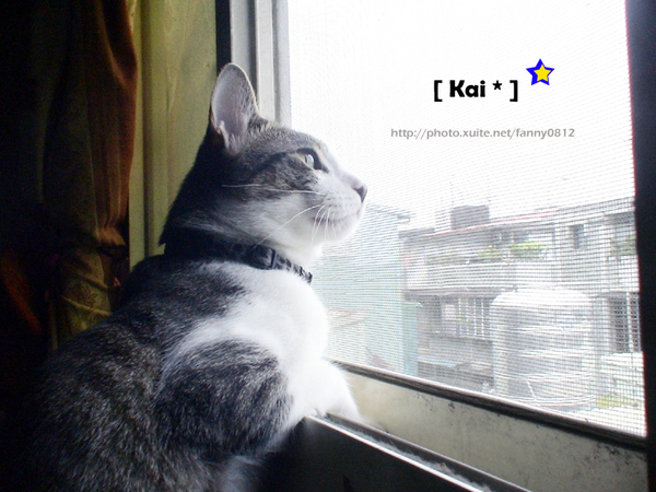 窗外天氣真好~喵