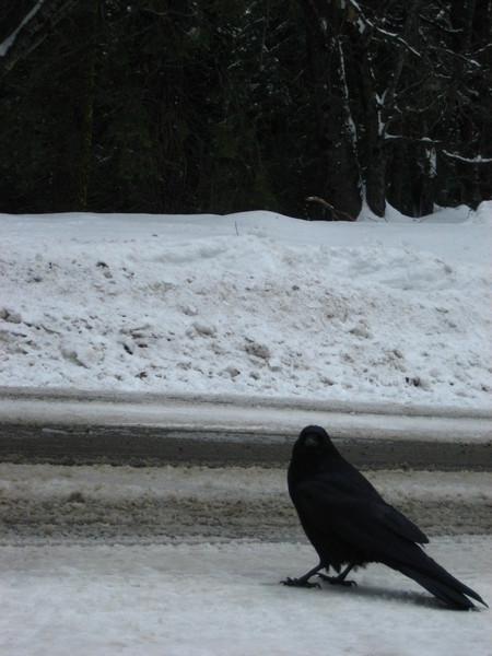 烏鴉很大隻