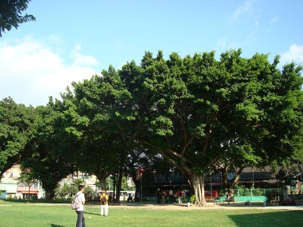 仁濟療養院大草坪