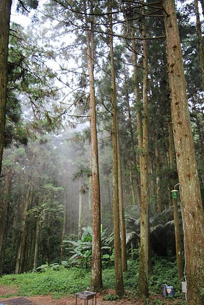 05-起初的森林