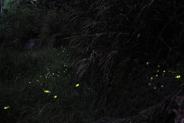 14-起初的螢火蟲
