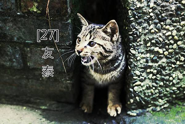 27.友泰
