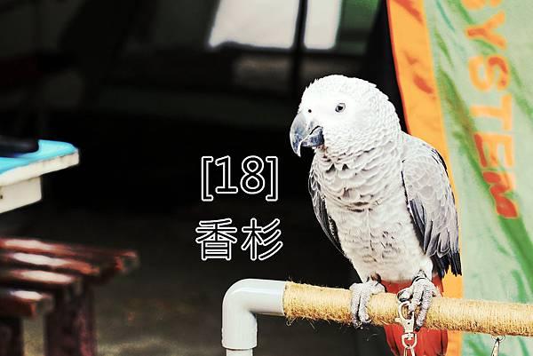 18.香杉