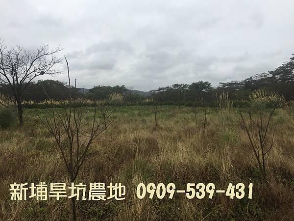 新埔旱坑農地 (2).JPG
