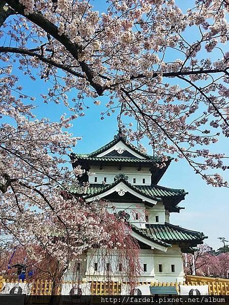 弘前城櫻花