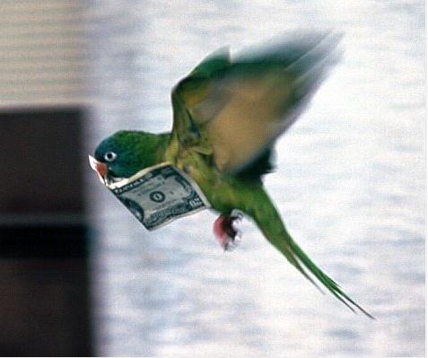 小偷班尼叫波利去偷錢