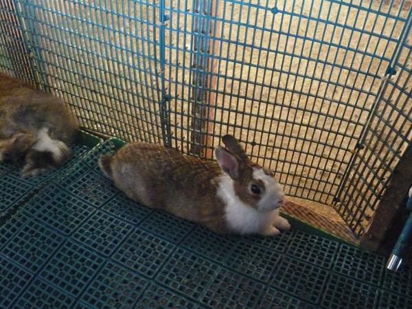 在餐廳內小走道窩著的小兔兔