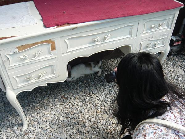 偷拍阿雯拍熟睡中的兔子