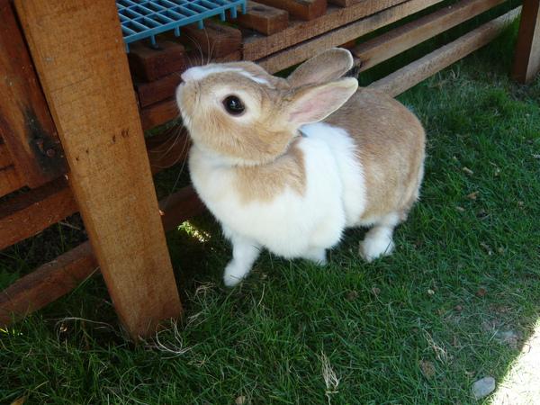 客人帶來的兔子都好可愛喔!