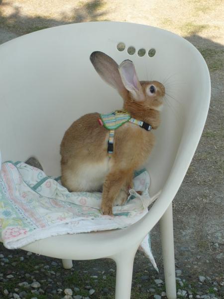爲什麼別人家養的兔子都那麼口愛?