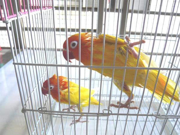 拍下兩隻鳥兒在陽台洗澡