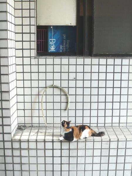 在等待我家對棟7樓的貓咪