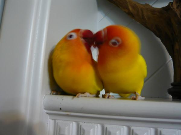 雖然這張有點模糊,但兩隻親嘴的模樣,像不像ㄧ個愛心