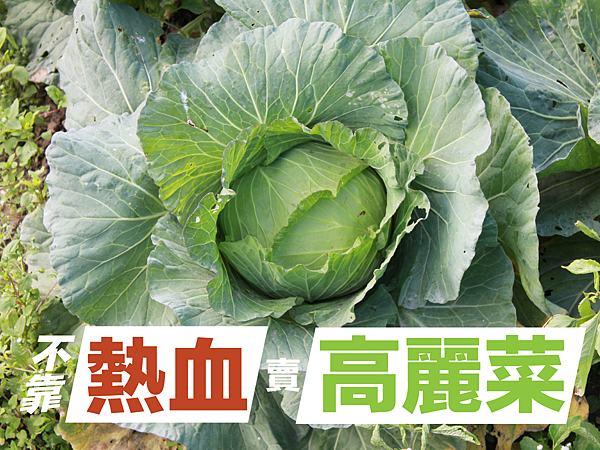 fb不靠熱血賣高麗菜-01