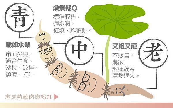 嘉義民雄阿元、曉玉.蓮藕