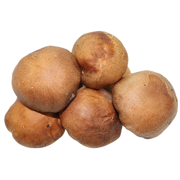 item-V8030新鮮香菇