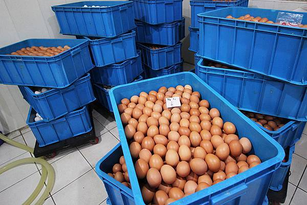 02排好準備醃漬的雞蛋.JPG