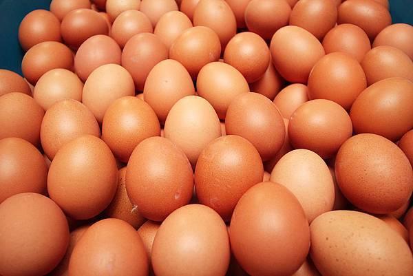 00雞蛋特寫_排列整齊的雞蛋可以控制讓雞蛋的氣室位置,確保品質.JPG