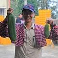 自然農法的絲瓜,有大有小