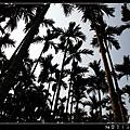 03_椰椰林.jpg
