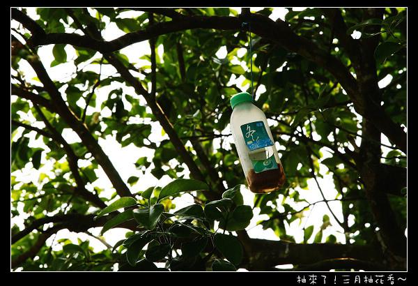 03_樹上的防蚊慣.jpg