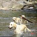 終於愛上玩水的三狗組