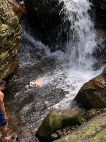 讓狗狗不怕水